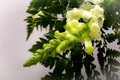 linden-tree-flowers-funeral-product-photography-sussex-15