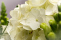 linden-tree-flowers-funeral-product-photography-sussex-17